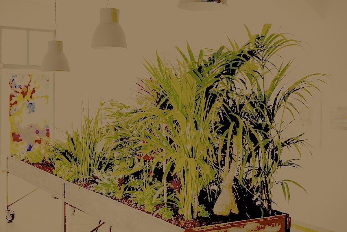 Pflanzentisch | Foto Elmar Bertsch